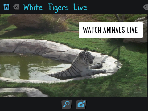 Virry - play with real animals App - 2