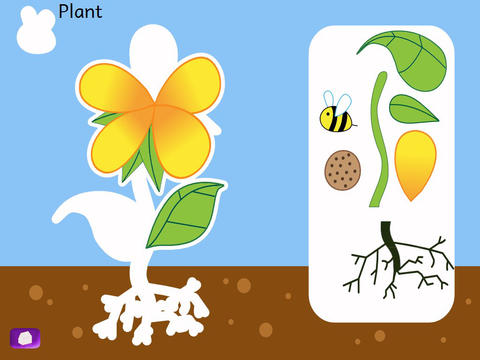 Naming Parts of Plants and Animals-1