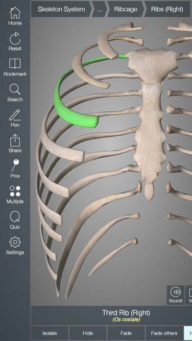 Essential Skeleton 4 App - 4