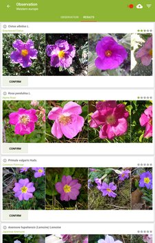 PlantNet Plant Identification-5