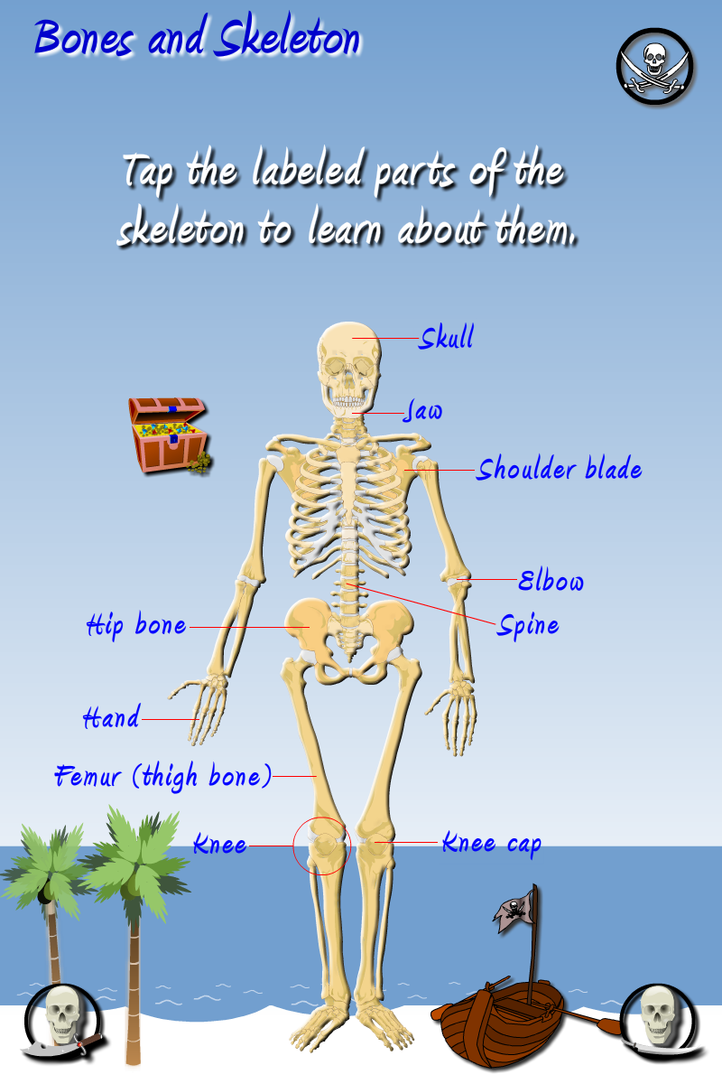 Fun science: The human body App - 3