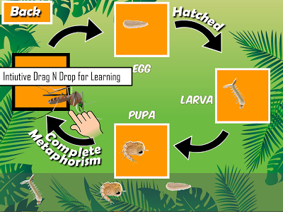 Insects Life Cycle Free App - 1