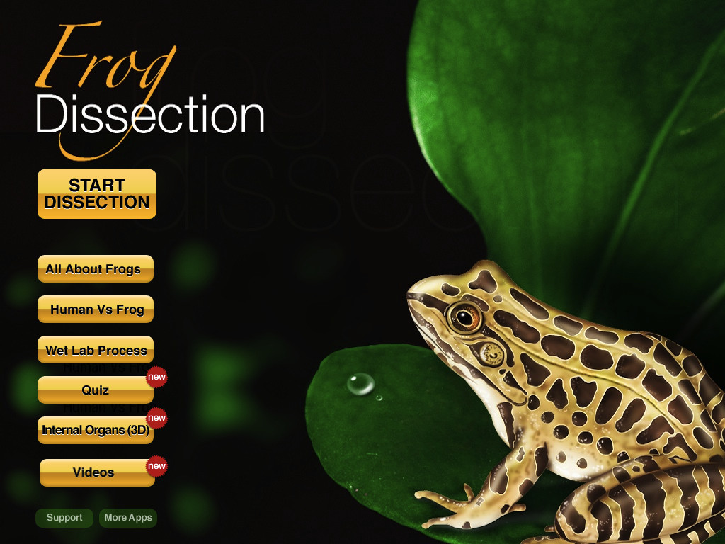 Frog Dissection-1