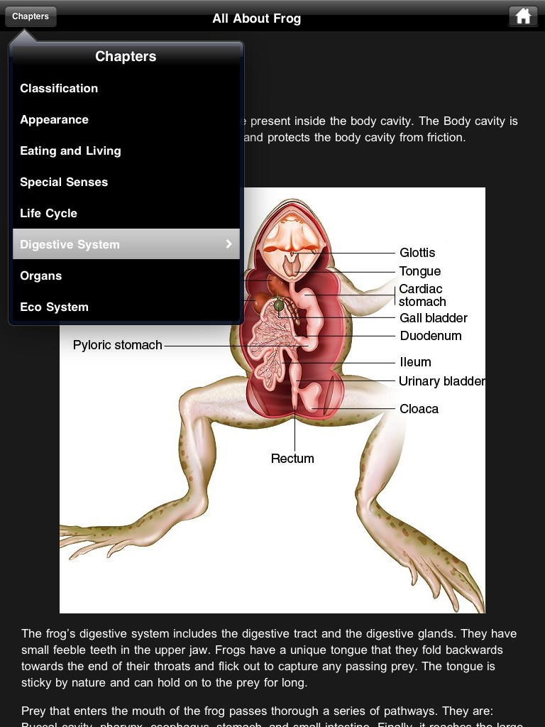 Frog Dissection Review – Virtual Frog Dissection Worksheet