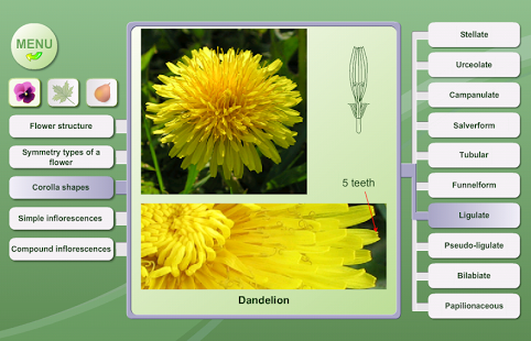 Biology. Plant Morphology App - 4
