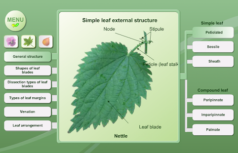 Biology. Plant Morphology App - 5