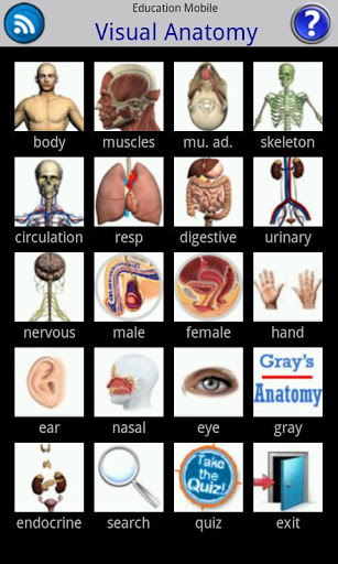 Visual Anatomy-1