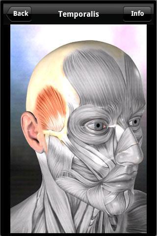 Learn Muscles: Anatomy App - 1