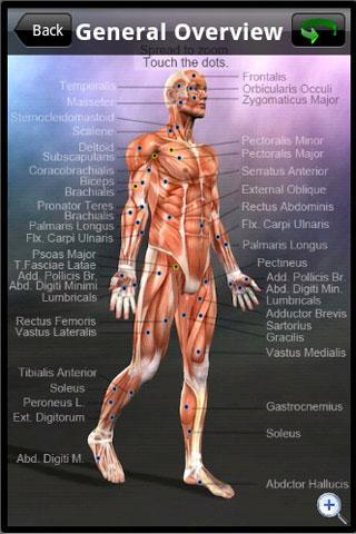 Learn Muscles: Anatomy App - 2