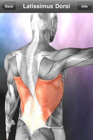 Learn Muscles: Anatomy App - 4