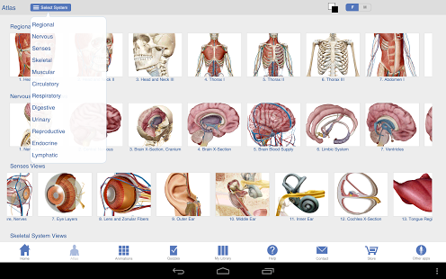 Human Anatomy Atlas-2