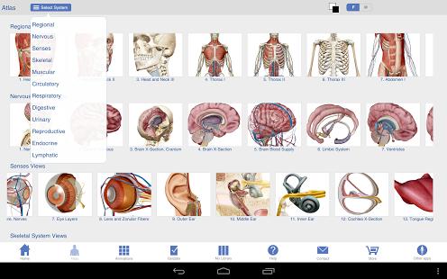 Human Anatomy Atlas-2