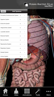Human Anatomy Atlas-4