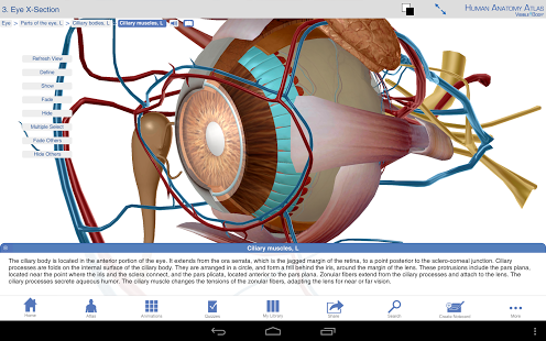Human Anatomy Atlas-5