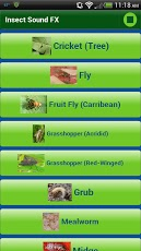 Insect Sound FX App - 3