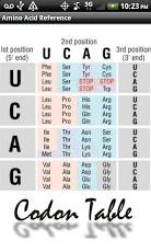 Amino Acid Reference-5