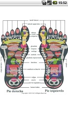 Reflexology foot chart-4