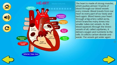 Body Organs 4 Kids-4