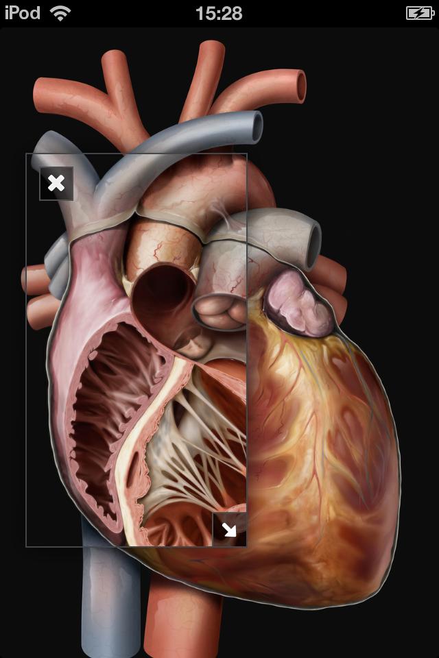 Virtual Human Body App - 5