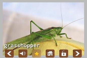 Kids Zoo Animal Sounds & Photos App - 7