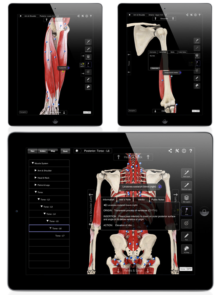 Muscle System Pro III