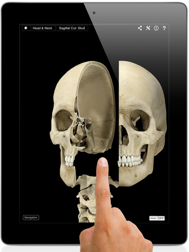 Skeleton System Pro III-1
