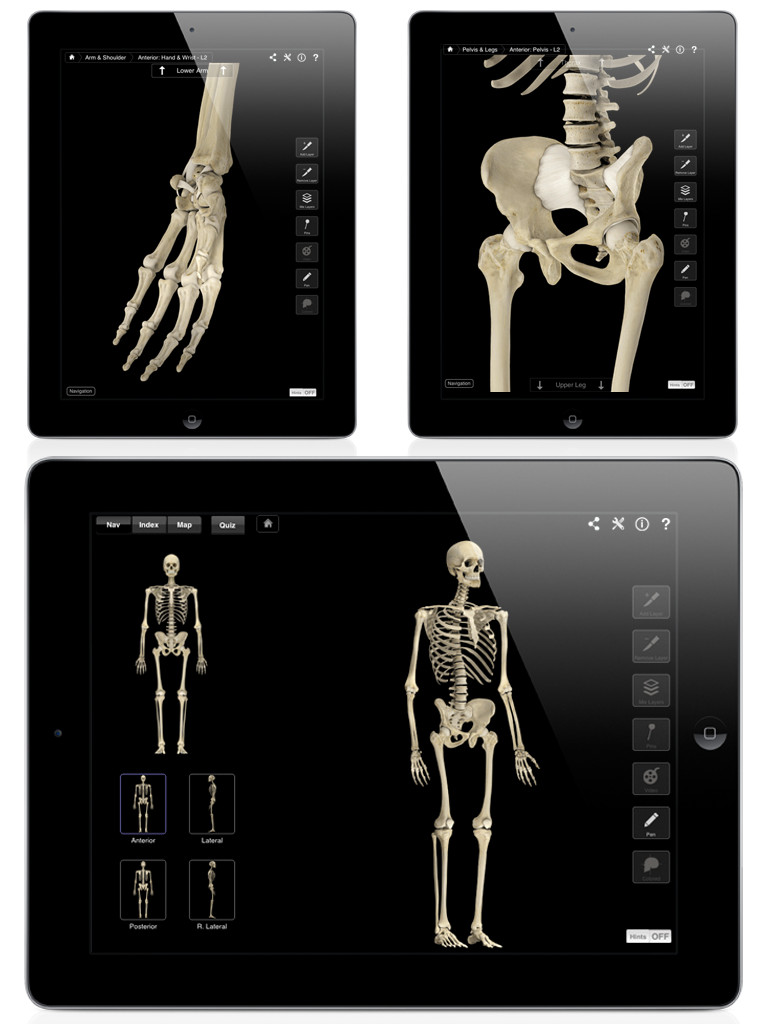 Skeleton System Pro III-2