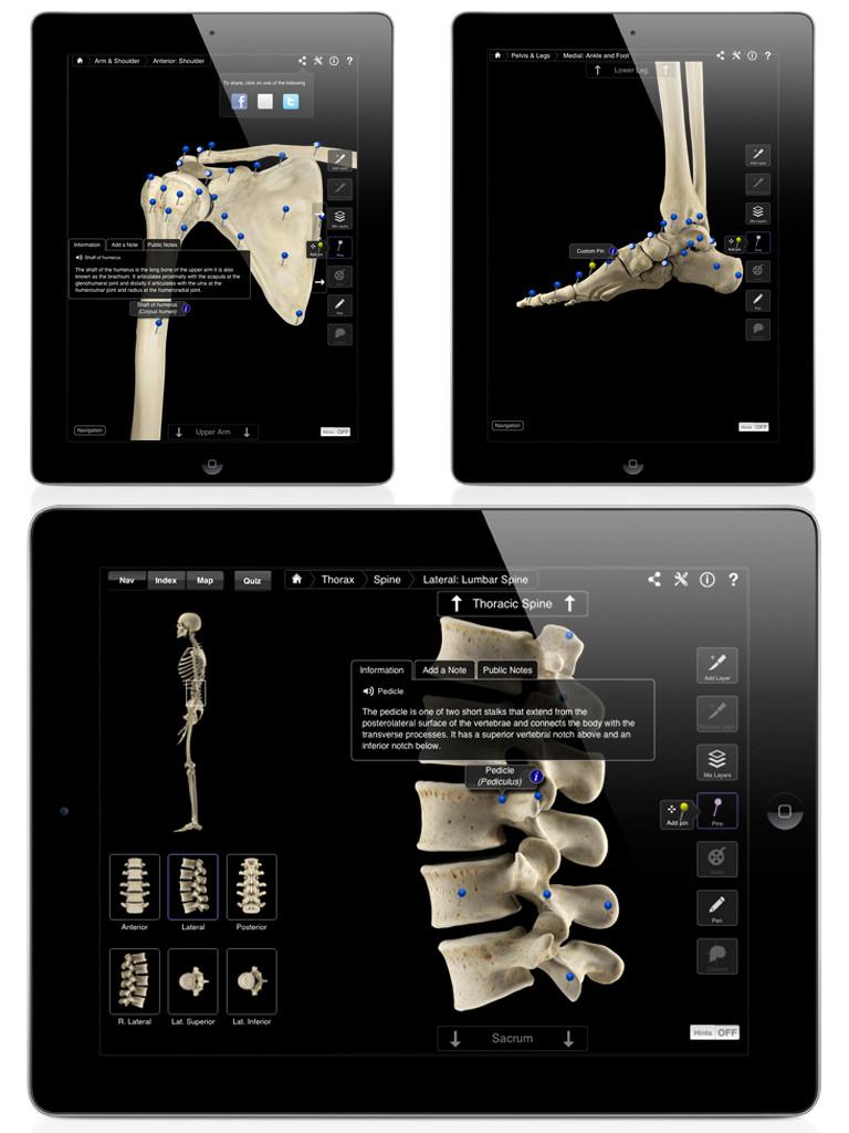 Skeleton System Pro III-4