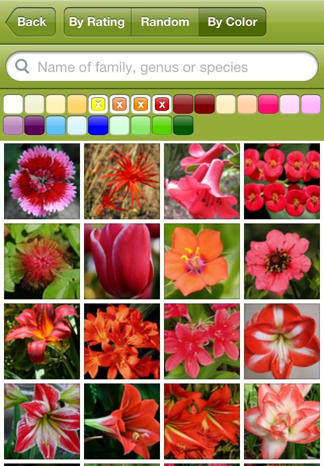 FlowerPedia-2