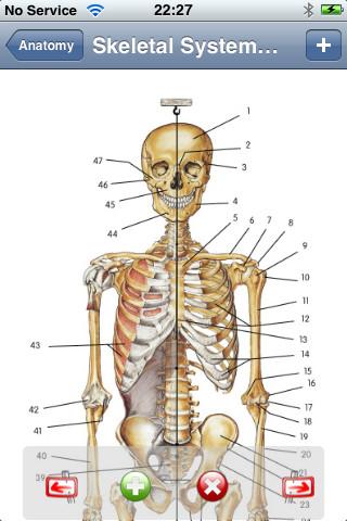 Anatomy Lite