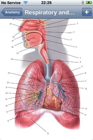 Anatomy Lite-3