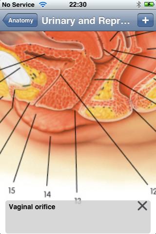 Anatomy Lite-5