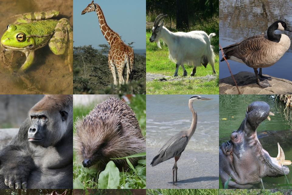 Explore the Animal Kingdom-3