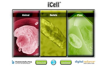 iCell App - 1