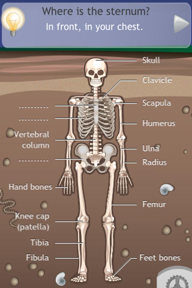D. Bones App - 2
