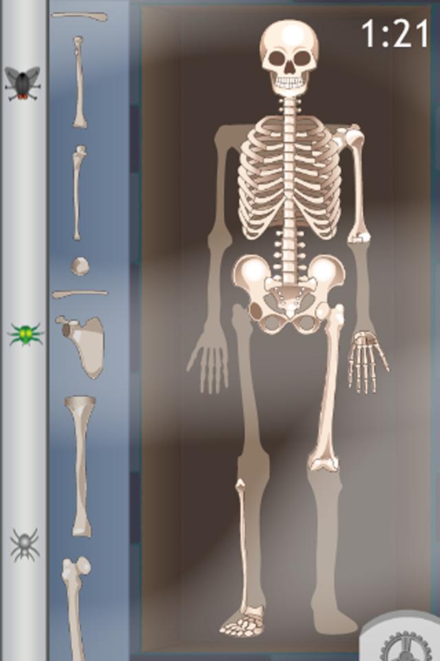 D. Bones