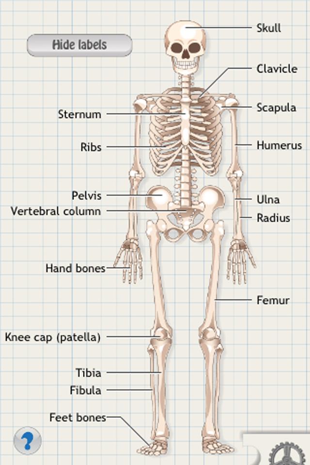 D. Bones App - 4