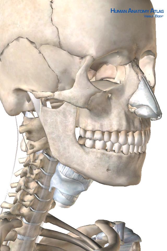 Human Anatomy Atlas SP-1