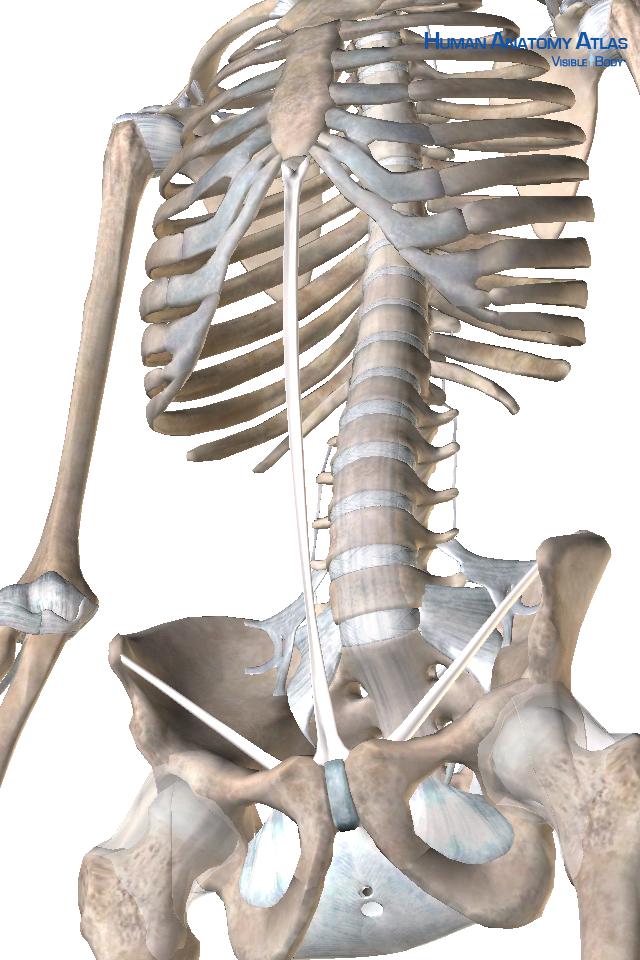 Human Anatomy Atlas SP-2