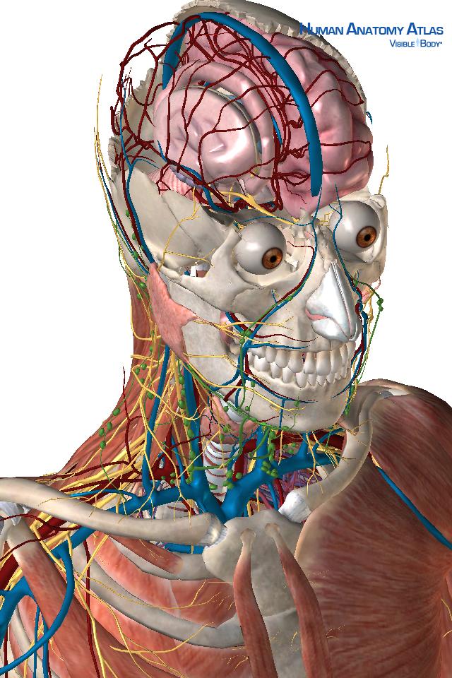 Human Anatomy Atlas SP-5