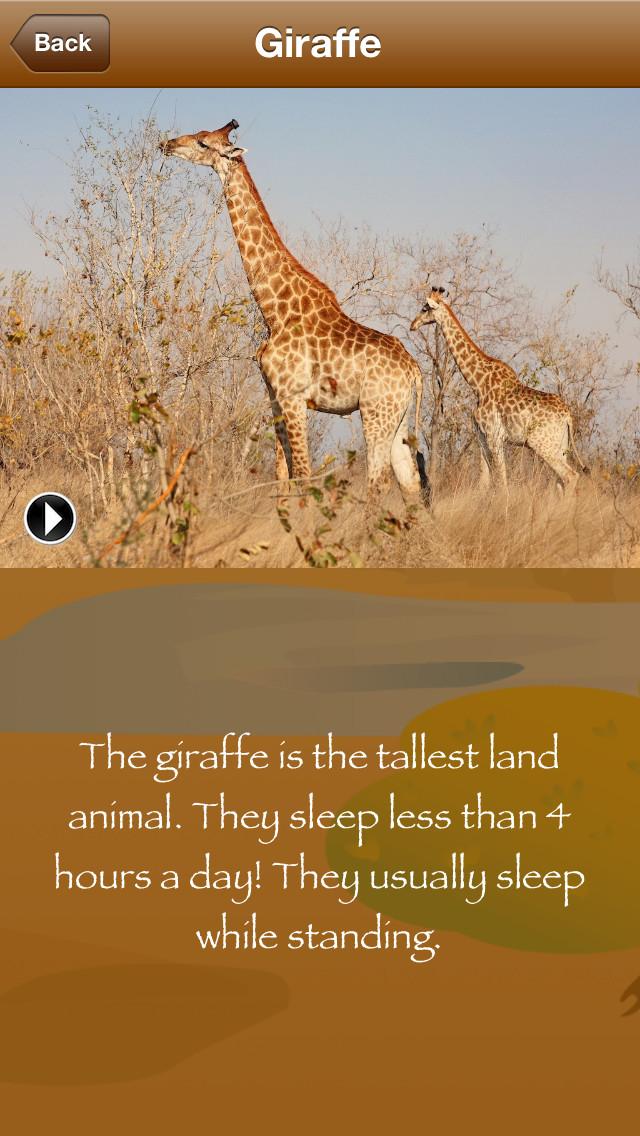 Africa Safari-3