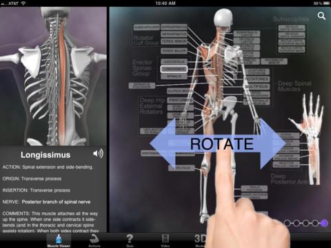 Muscle & Bone Anatomy 3D-1