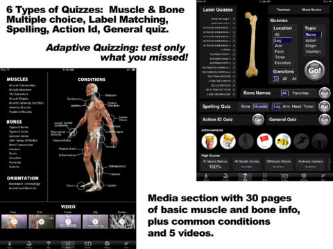Muscle & Bone Anatomy 3D-5