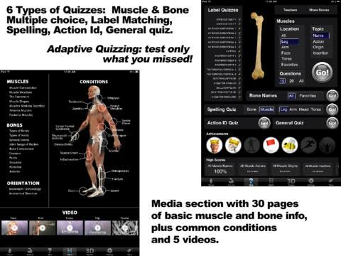 Muscle & Bone Anatomy 3D-5