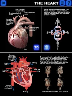 Anatomy 3D: Organs-1