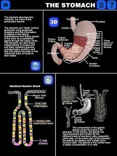 Anatomy 3D: Organs-4