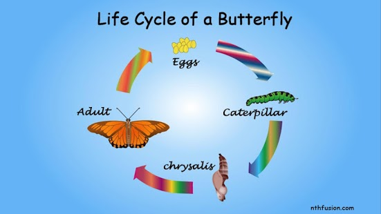 A Life Cycle App-2