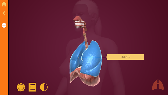 Anatomy | The Human Body-1