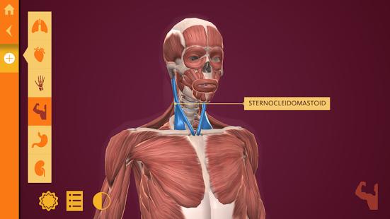 Anatomy | The Human Body-2