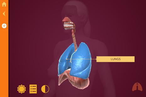 Anatomy | The Human Body-3